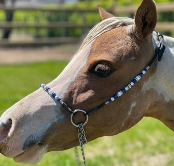Showhalster voor miniatuurpaard Blauw
