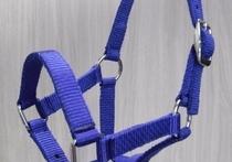 Halsters, touwen & lijnen